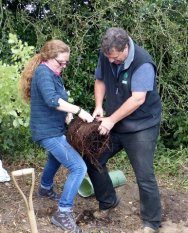 Jon Stokes of The Tree Council & Alice Martin of Mid Suffolk & Babergh District Council teasing out the roots.