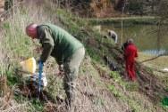 Planting on 45' slope