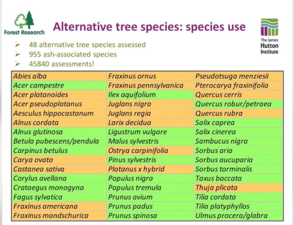Alternative tree species