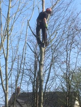 Cameron up the tree!