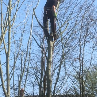 Cameron up the tree!